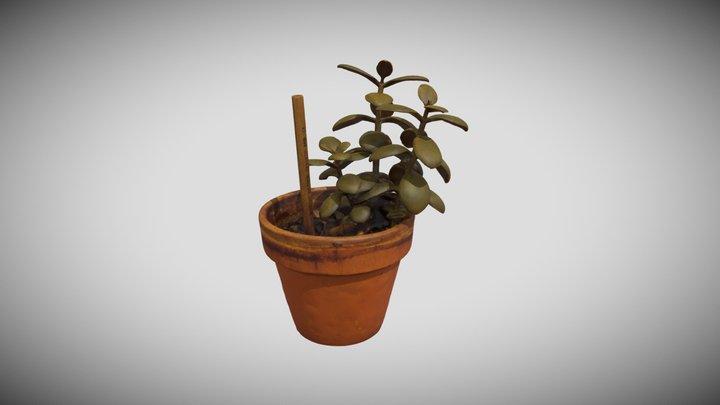 Potted Flower 3D Model