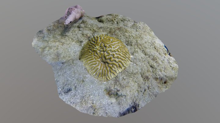 0144 - Coral colony 3D Model