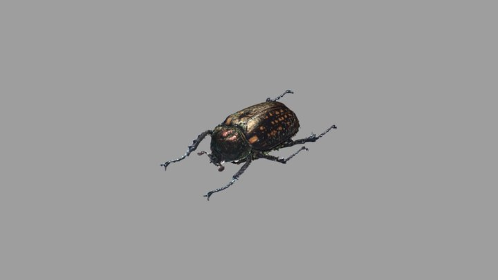 [WITHOUT UV] Long-armed scarab Female 3D Model