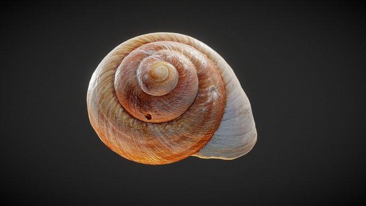 Shell 03 3D Model