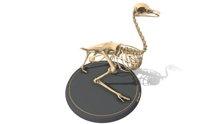 Ostrich Skeleton 3D Model