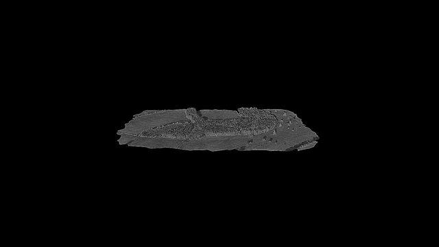 Multispectral Forest Mesh 3D Model
