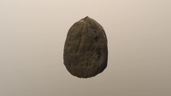 Processed Nut 3D Model