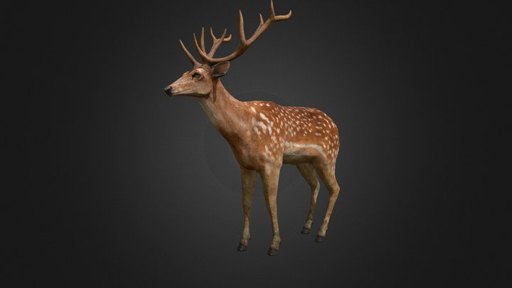 Deer Stag 3D Model