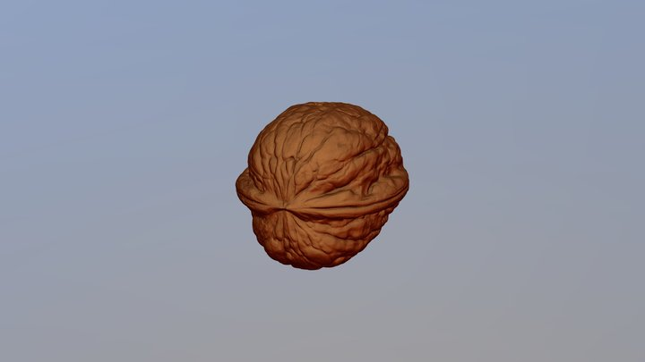 Walnut scanned with D3D-s scanner retina res. 3D Model