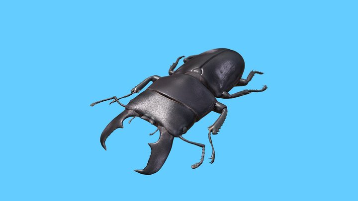 Giant Stag Beetle 3D Model