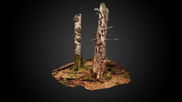 Silver fir snag (Abies alba) 3D Model