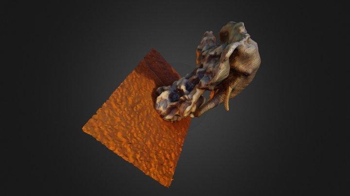 Mamut3d 3D Model