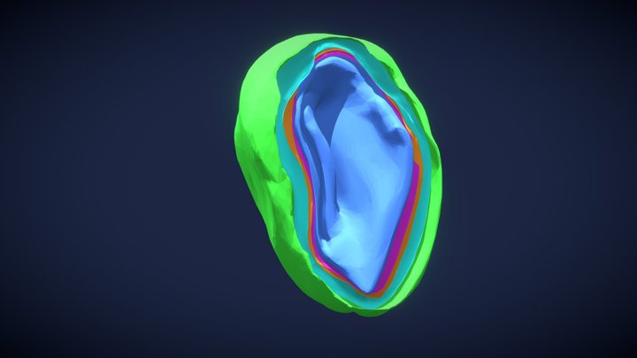 Mouse Olfactory Bulb Layers 3D Model