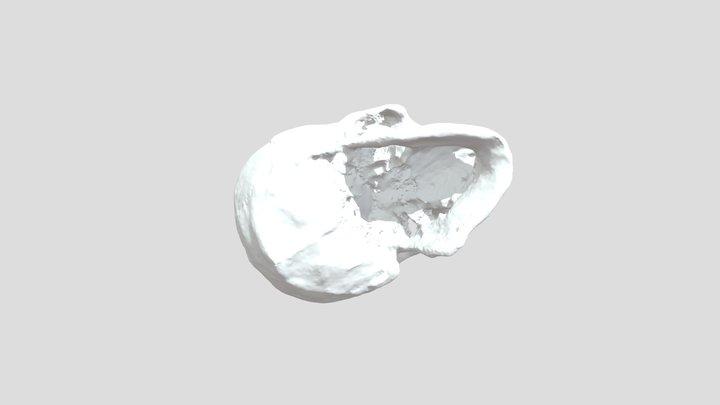 Teryuchanin SCULL 3D Model