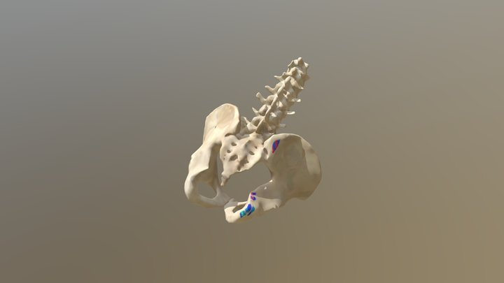 Hip extension_Yves Klein Blue 3D Model