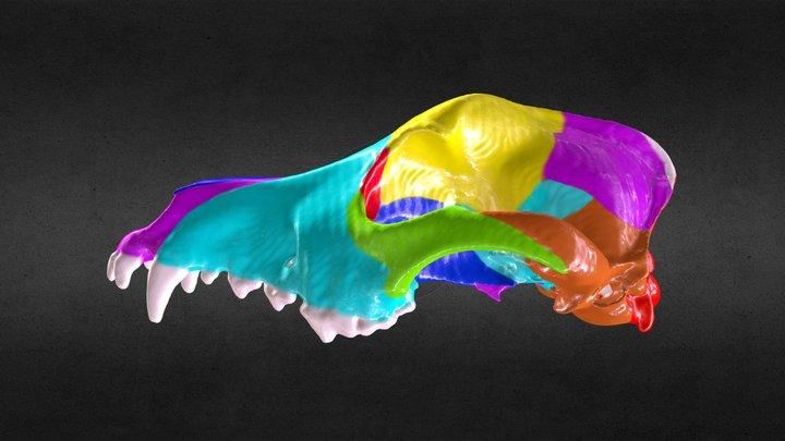Dog Skull painted bones 3D Model