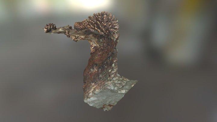 Pocillopora Eydouxi Lehua 3D Model