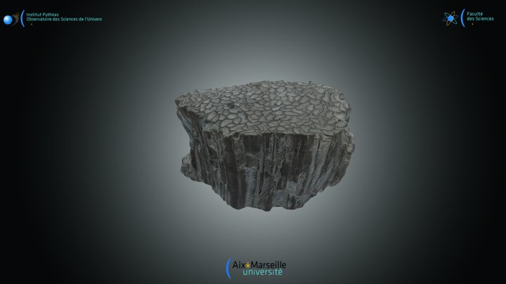 Halysites 3D Model