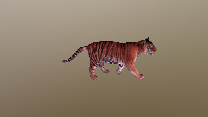 Tiger A Posed 0060 3D Model