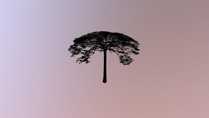 Moabi, Lopé National Park, Gabon 3D Model