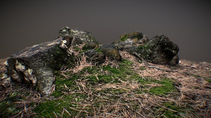 Tree Stump 003: Photogrammetry 3D Model