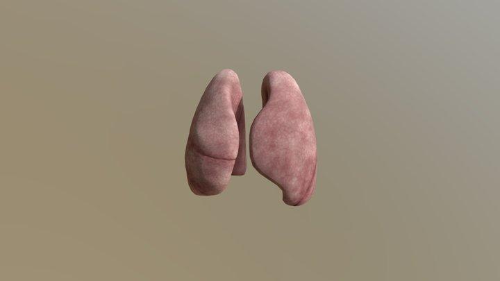 Lungs 3D Model