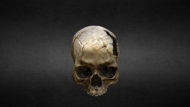 Crânio PUCRS 3D Model