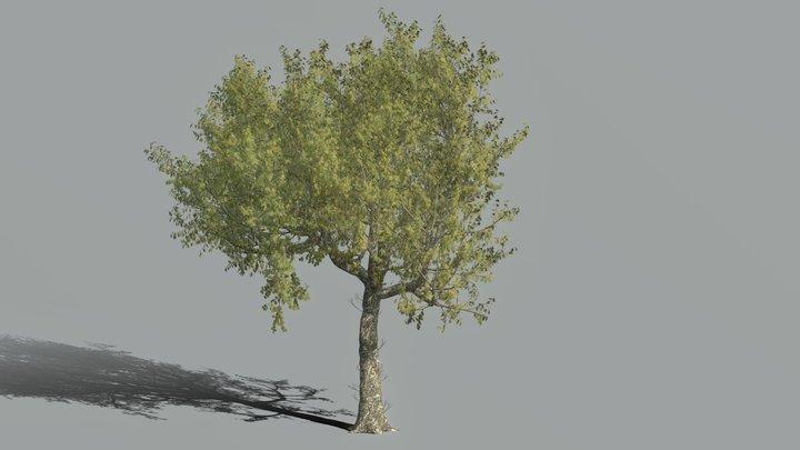 High Poly Red Oak Tree 3D Model