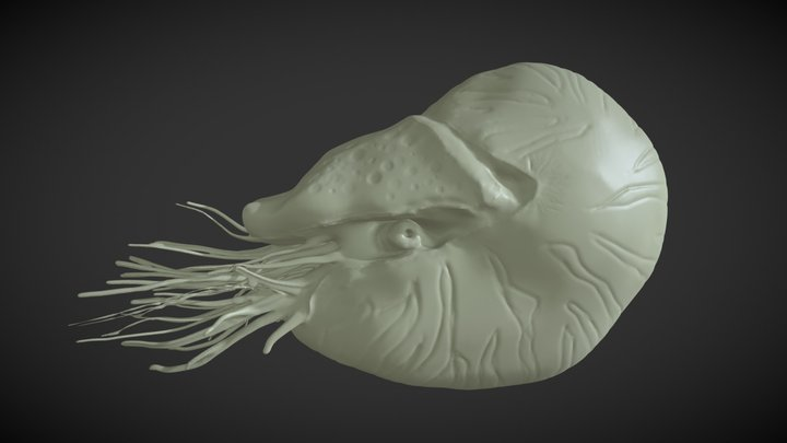 "Sculpt January 18: day11: ,,marine"" 3D Model"