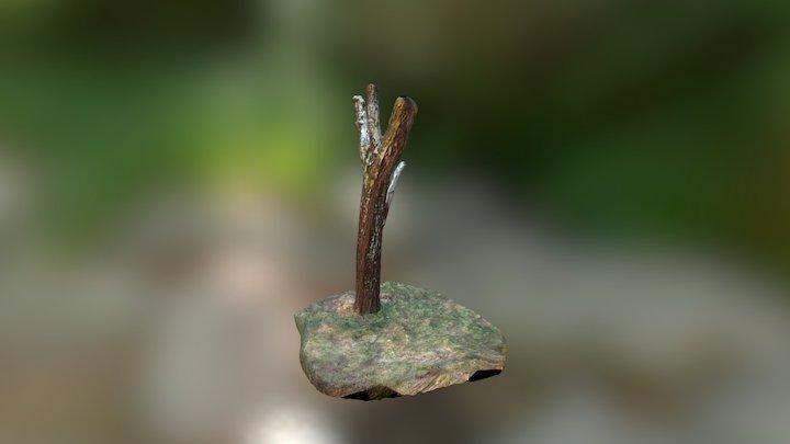 3D Scanned Tree 3D Model