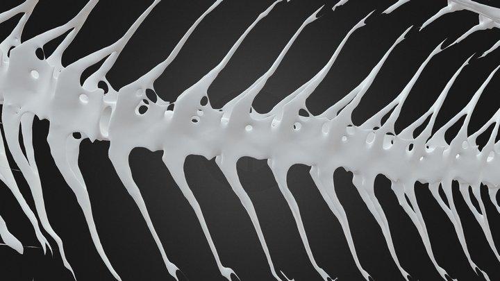 Hardhead Snailfish (Lopholiparis flerxi) 3D Model