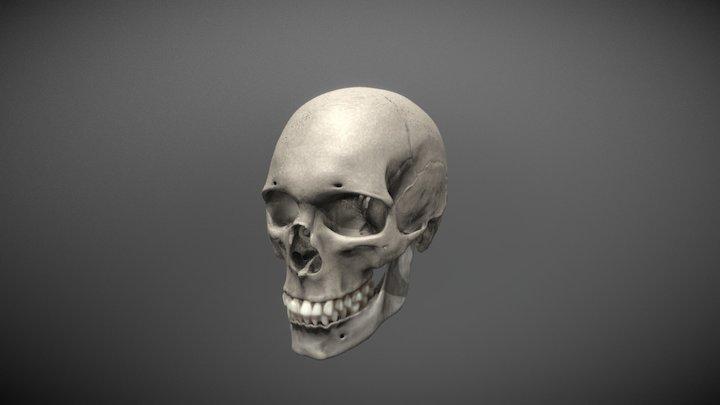Skull Tex 3D Model