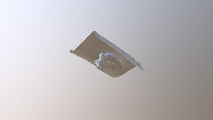 dog (photogrammetry agisoft) 3D Model