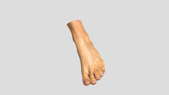 Human Leg 3D Scan 3D Model