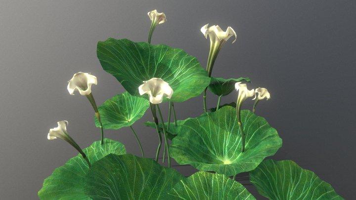 Lilypads 3D Model