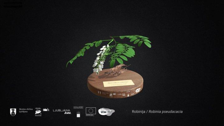 Robinija 3D Model