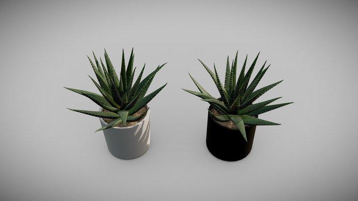 Zebra Plant (Haworthia fasciata) 3D Model