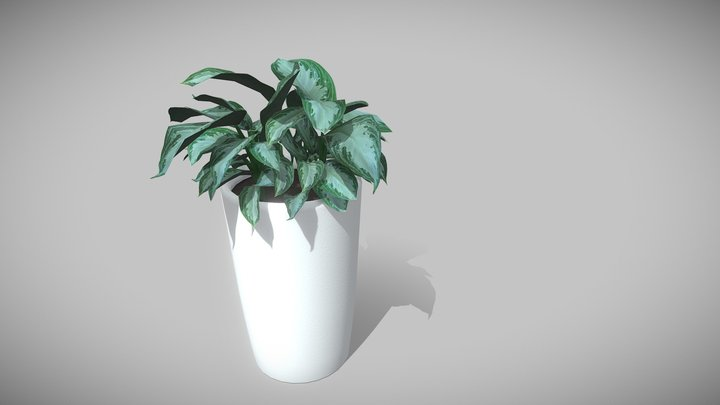 Tall Potted House Plant 3D Model