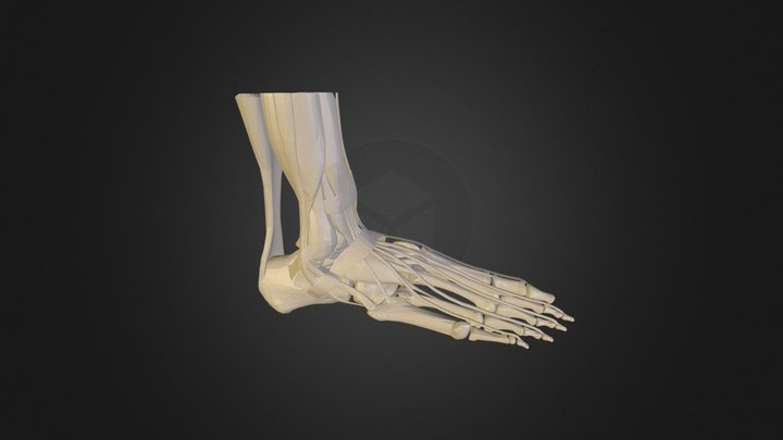 Foot feet (collection of thunthu) 3D Model