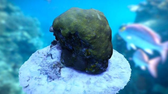 Coral Bommie 3D Model