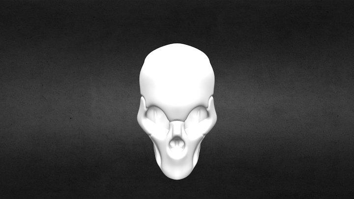 Calavera - Skull in process 3D Model