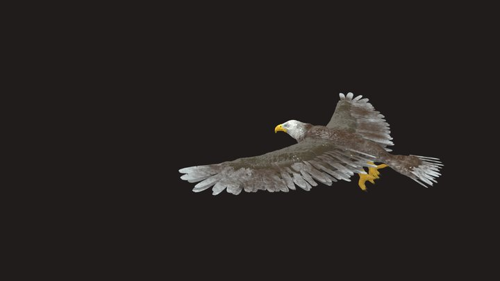 Free Eagle 3D Model