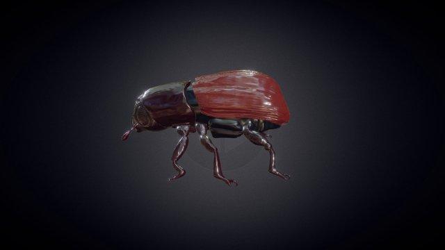 Beetle High Poly 3D Model