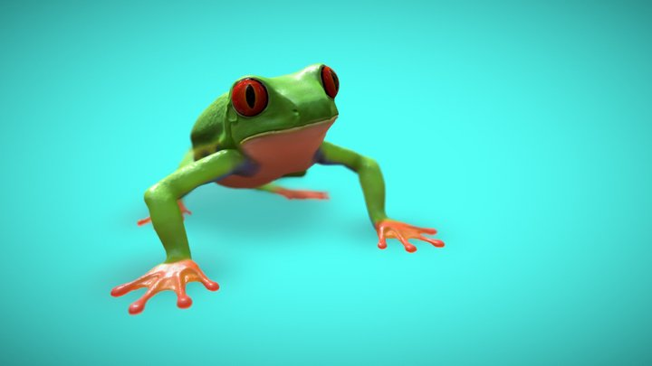 Red-Eyed Tree Frog 3D Model