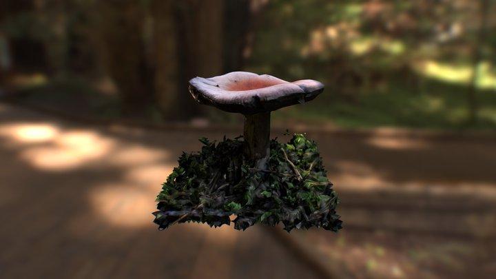 Mushroom in forest 3D Model