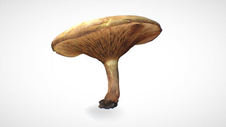 Mushroom 9 - retopo 8K PBR 3D Model