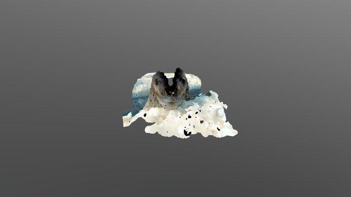 Leopard Seal Head Deep Learning Test 3D Model
