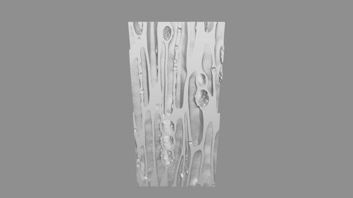 Redwood 3D Model