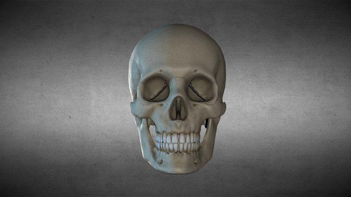 Calavera 3D Model