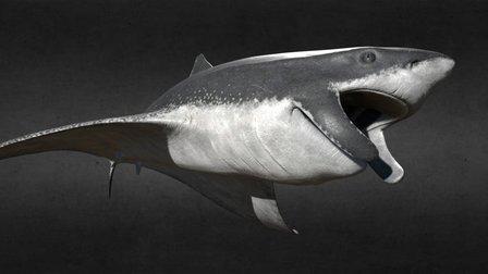 Megalodon Monolith 3D Model