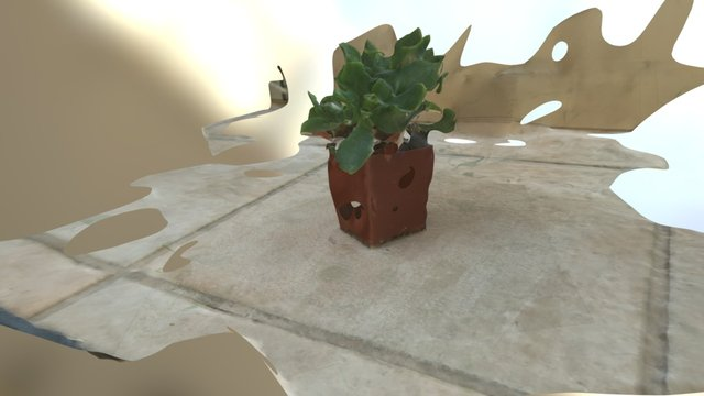 Succulent Pot 3D Model