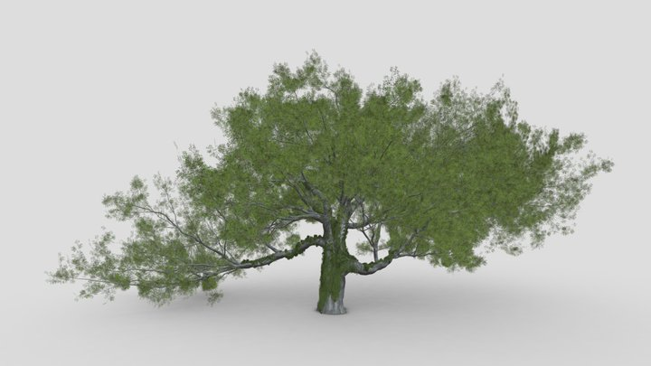 Live Oak by Ivy-New Style 3D Model