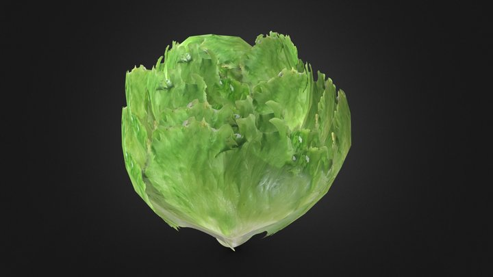 Low poly lettuce 3D Model