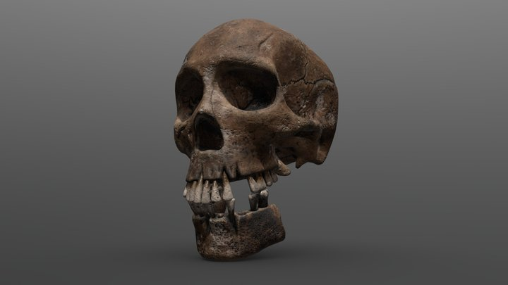 Old damaged human skull 3D Model